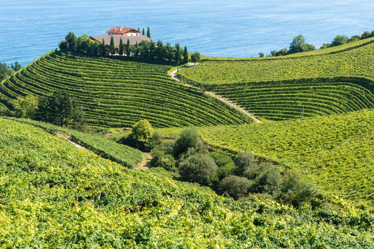 Image of hilly vineyards and a winery with blue sea on the background.