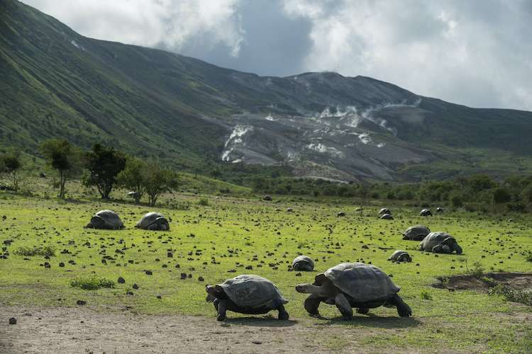 Turtles and Galapagos landscape
