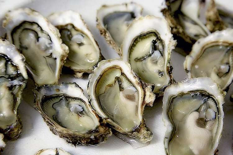 Image of fresh oysters