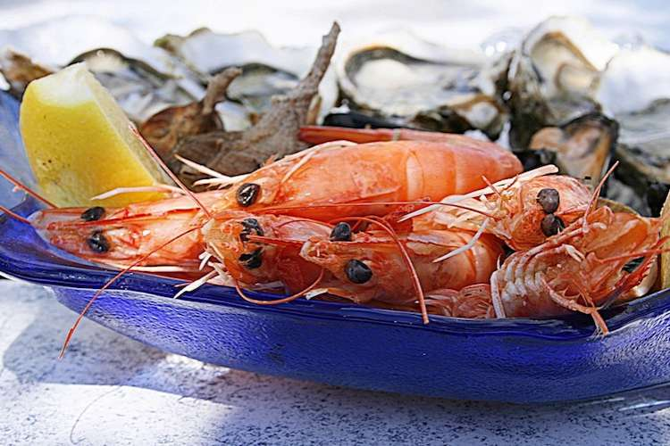 Image of shrimp and oysters on a plate