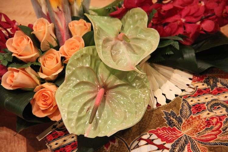 Dianthus Miami